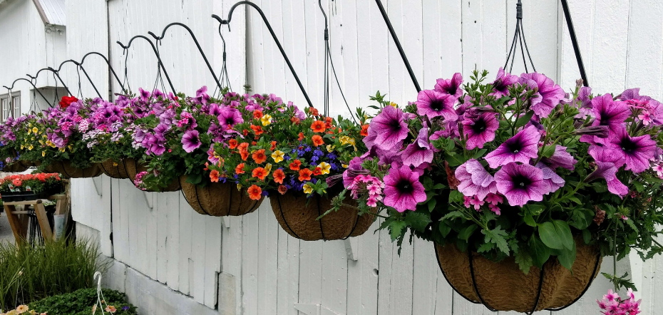 best plants to grow in a hanging basket
