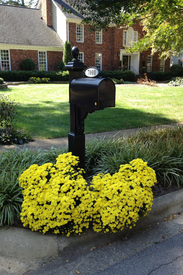 Yellow flowers planted around a mailbox