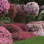 Bubblegum petunias growing in landscape