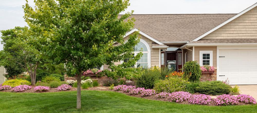 Bubblegum petunias in a house's landscape
