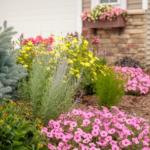 Bubblegum petunias planted in landscape