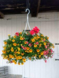 Blooming hanging basket in Ephrata pa