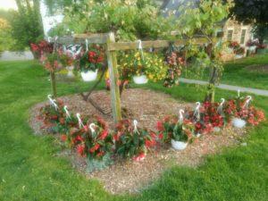 Greenhouses displayed around grape vine