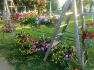 Hanging basket display with ladders