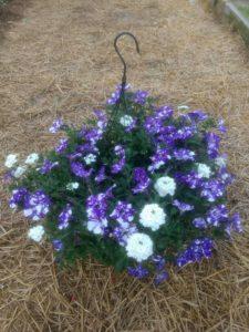 Hanging basket with Wave petunias and verbena