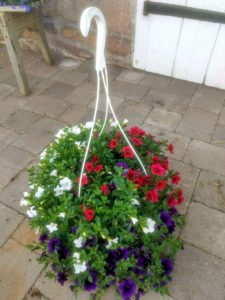 Hanging basket with calibroachoa three colors