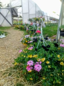 Homestead Gardens walk-through - hanging baskets