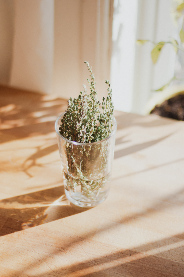 Cut Thyme in a Glass of Water